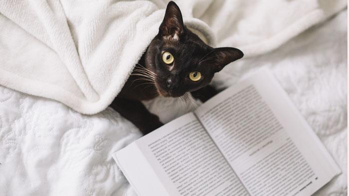هوش گربه ها