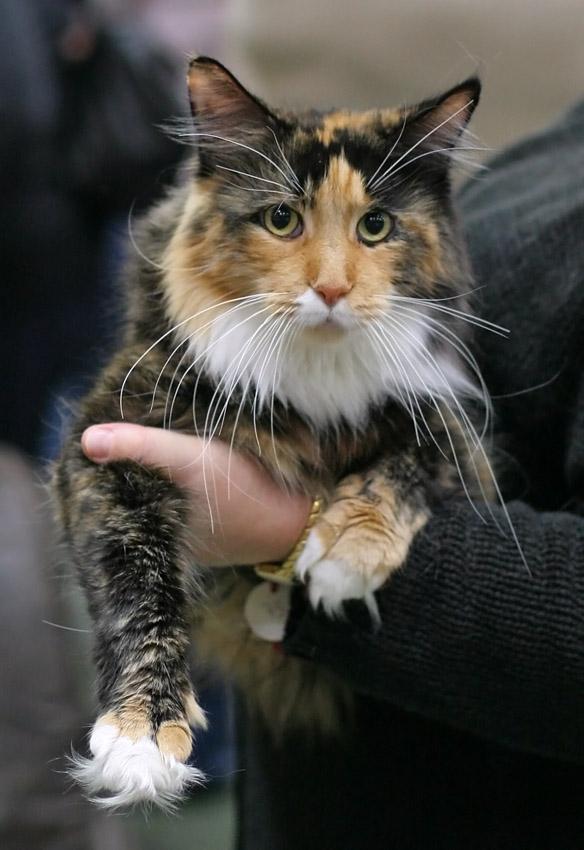 بلندترین سبیل گربه ثبت شده
