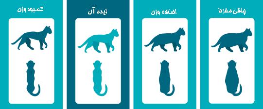 تشخیص اضافه وزن و یا کمبود وزن از روی ظاهر گربه