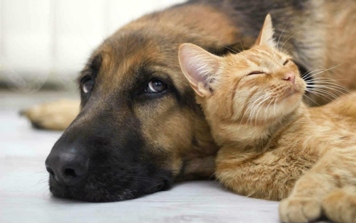 سگ و گربه در کنار هم خوابیده اند