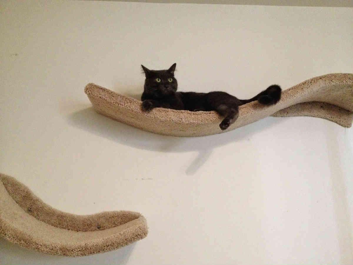 گربه بر روی قفسه های نصب شده روی دیوار