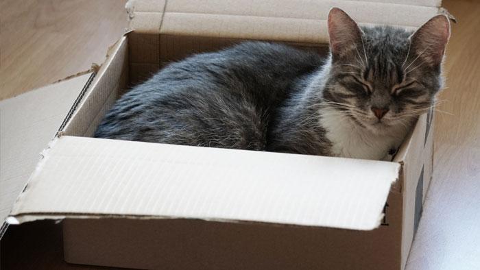 گربه در کارتن مقوایی