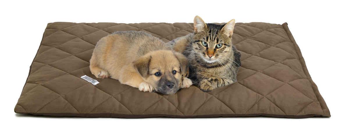 گربه و سگ روی یک تشک