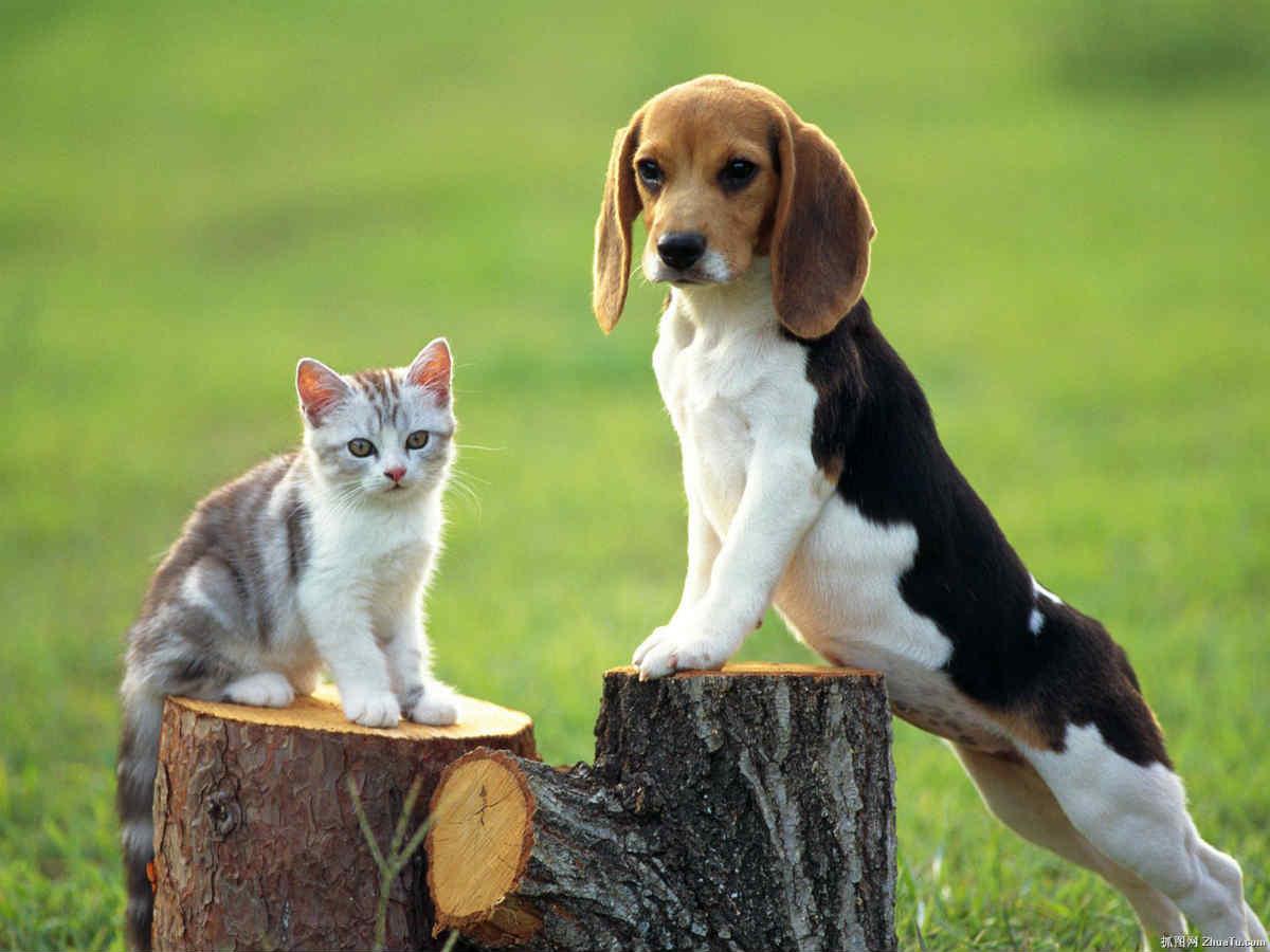 بچه گربه و سگ بالغ