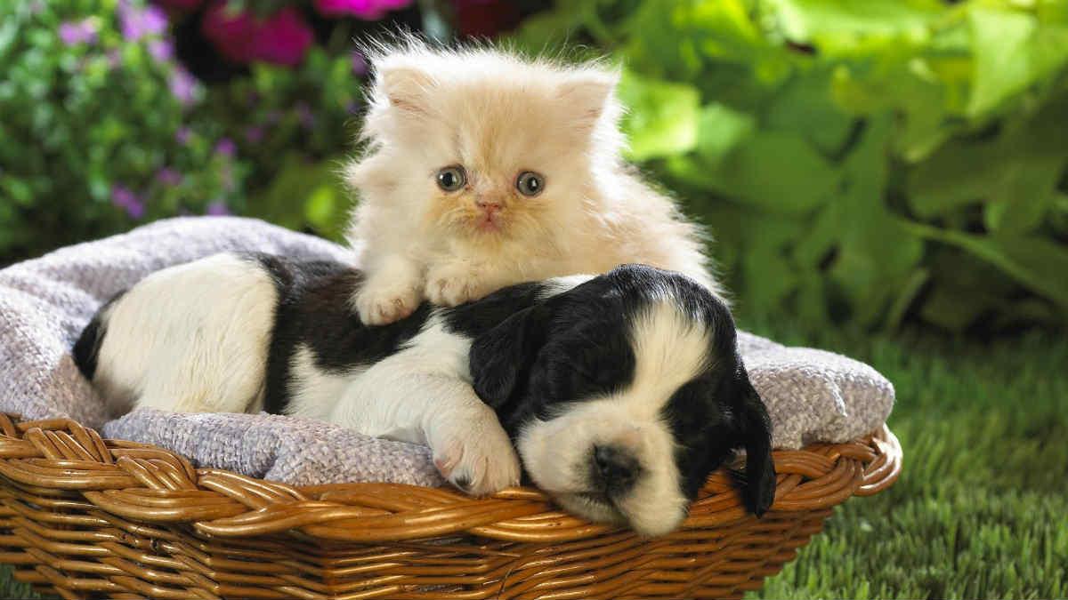 توله سگ و توله گربه
