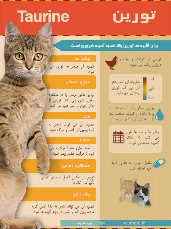 اینفوگرافی تورین در تغذیه گربه ها