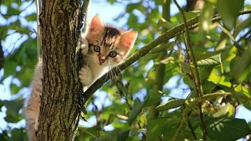 توانایی شگفتانگیز گربهها برای زنده ماندن از سقوط از ارتفاع