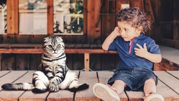 چگونه گربه خود را با نوزاد تازه متولد شده خود آشنا کنیم؟