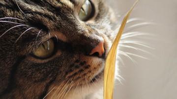 قدرت بویایی در گربه ها