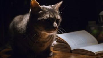 چگونه گربه تان را از بیدار کردن خود در شب بازدارید