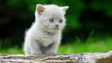 چگونه می توان بچه گربه ها را از گربه مادر جدا کرد