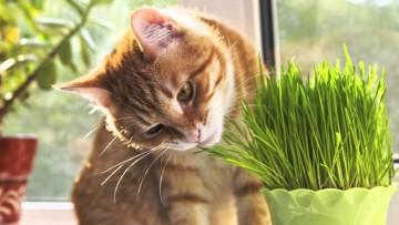 چطور از خوردن گیاهان خانگی و ریختن خاک گلدان توسط گربه ها جلوگیری کنیم