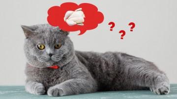 رژیم غذای خام برای گربه ها