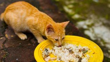 برنج در رژیم غذایی گربه ها