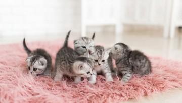 چه زمانی می توان بچه گربه را از مادرش جدا کرد؟