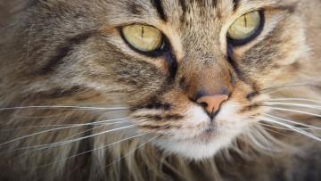 چرا گربه ها سبیل دارند؟ 11 نکته جالب در مورد نقش سبیل در گربه ها