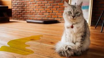چرا گربه من خارج از ظرف خاکش ادرار می کند؟